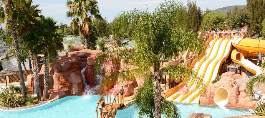 palmiers-4